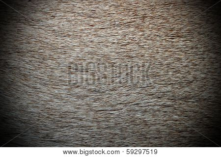 Roe Deer Textured Pelt