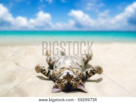 cat on beach and blue sky