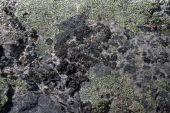 stock photo of obsidian  - Close up of obsidian a rare volcanic rock - JPG