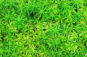 image of chloroplast  - Big juicy shot green moss for background - JPG