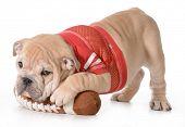 foto of stuffed animals  - sports hound  - JPG