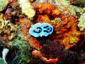 pic of cebu  - Underwater inhabitants of sea depths of strait Cebu - JPG
