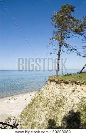 Latvia. Beach And Pine On The Steep Coast Of  Baltic Sea