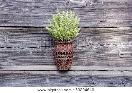 Harvest Symbol - Wheat Ears In Wicker Basket On Old  Barn Wall