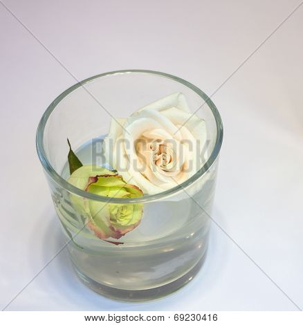 Roses Inside The Glass