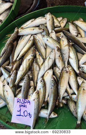 Kupa Fish