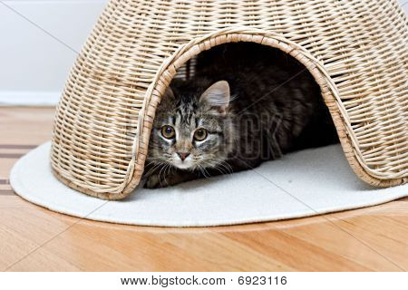 Young adorable cute cat is hiding in pet house playing