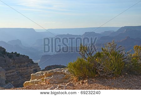Plants and shrubs cling to cliff edge on South rim of Grand Canyon, Arizona