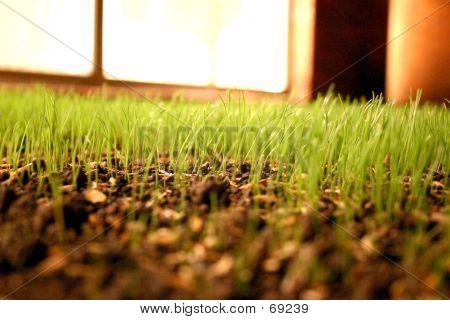 Grass Close Up At Night