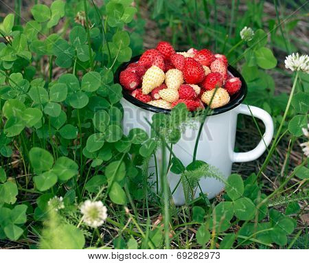 Mug Full Of Wild Strawberries In The Grass