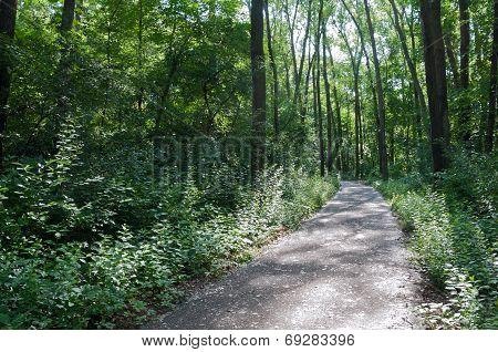 Marthaler Park Forest Trail