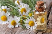 picture of chamomile  - fragrant oil of chamomile flowers in a glass bottle macro on wooden table horizontal