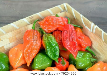 Hottest Pepper