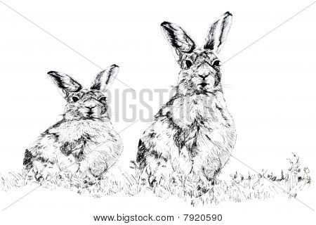 The Hares