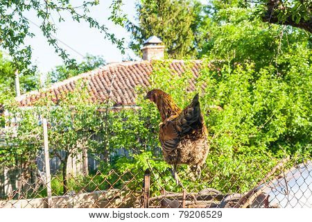 Hen On A Fence In A Farmyard