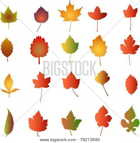 Autumn Leaves  - vector illustration