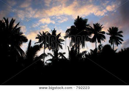 coconuts silhouette