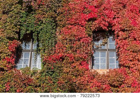Red And Green Ivy Surround Windows On Castle