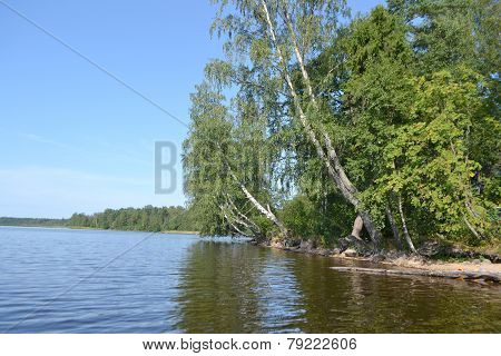 Forest On The Banks Of Lake