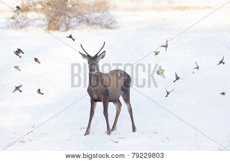 Red Deer On Snow