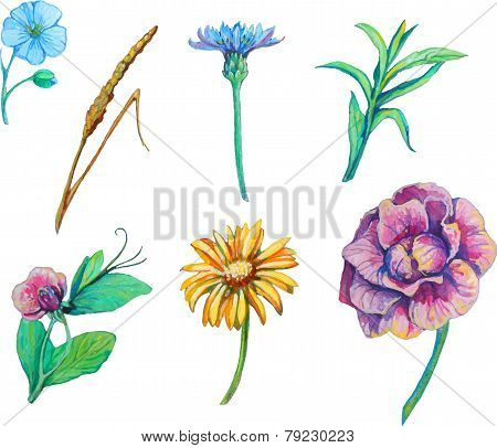 set isolated floral elements