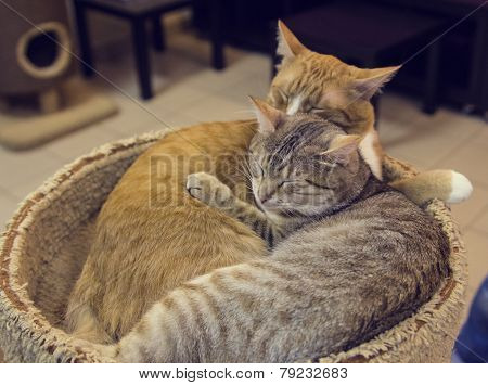 a pair of red and gray cat sleeping