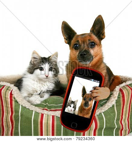 a dog and a kitten in a pet bed taking a selfie together