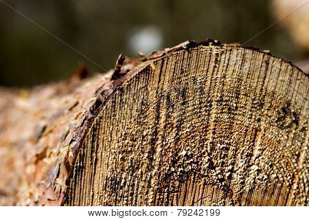 Cutted Firewood With Blured Background