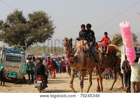 People on A Camel