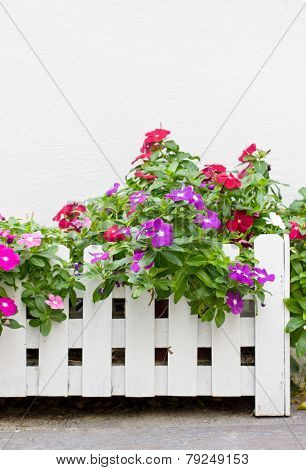Colorful Vinca Flowers In White Wooden Pot With Copy Space.