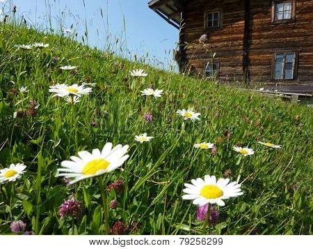flower meadow against the Refuge