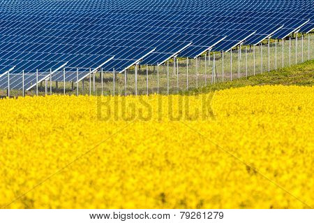 Solar panels in a rapeseed field