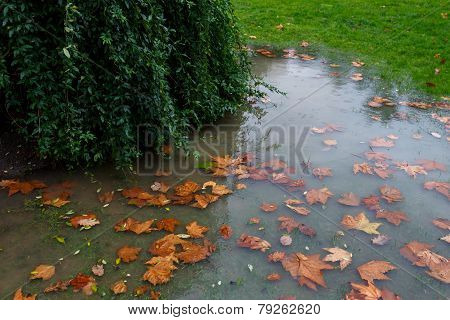 autumn leaves in a puddle
