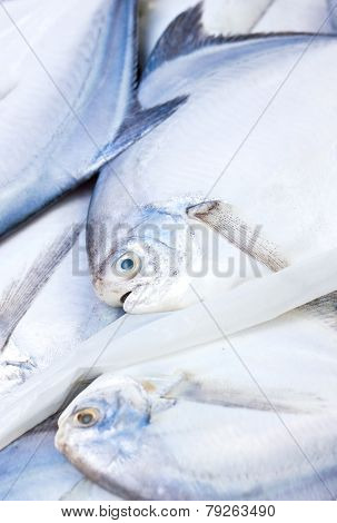 Close Up Of Fresh Raw Pomfret Fishes.