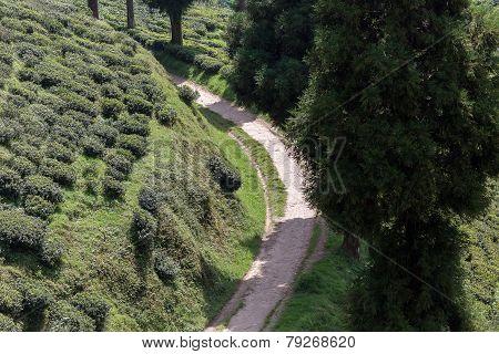 Road through Tea Plantation