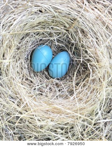 Two Robin Eggs