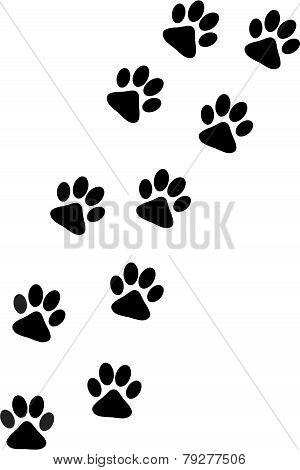 Dog Paw Track