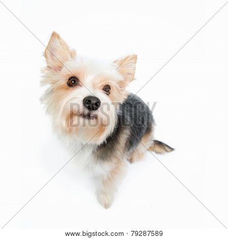 Cute puppy begging
