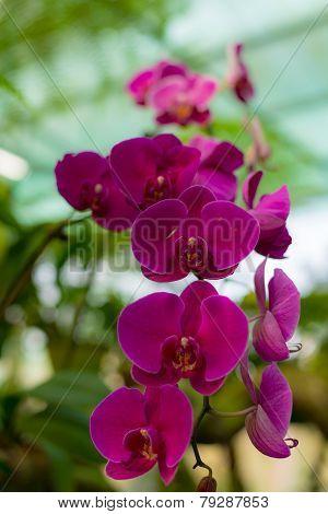Malaysian Borneo Orchid Garden