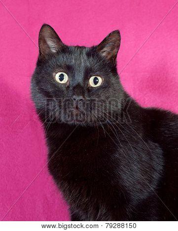 Black Cat On Crimson