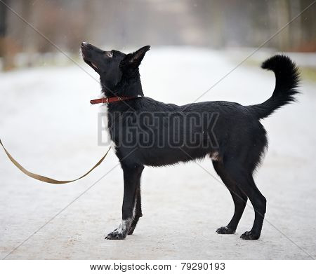 Black Doggie On Walk.