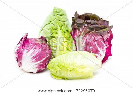 Baby Cos, Radicchio And White Cabbage.