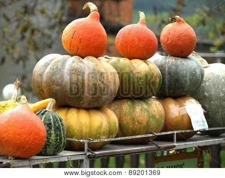 Autumn Pumpkins