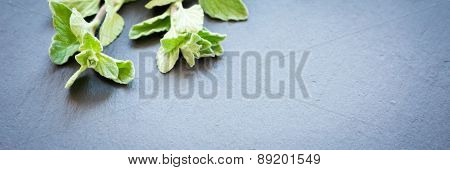 Fresh Oregano On A Dark Stone Background
