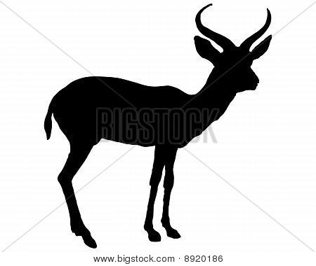 Black Antilope