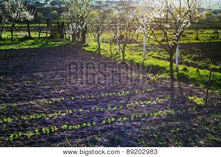 Vegetable garden at spring