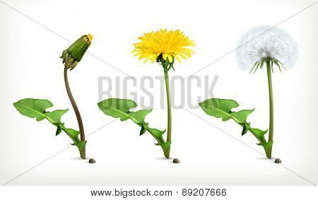 Dandelion flowers, vector icon set