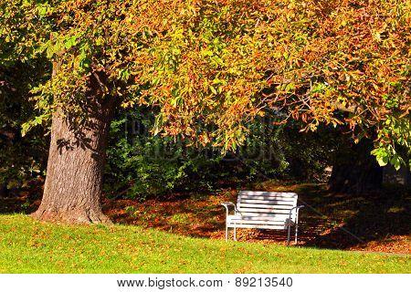 Autumn landscape in city park.