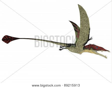 Eudimorphodon Over White