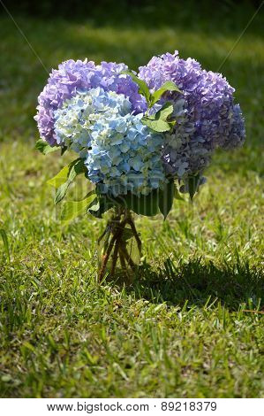 Bouquet Of Purple Hydrangeas In Glass Vase